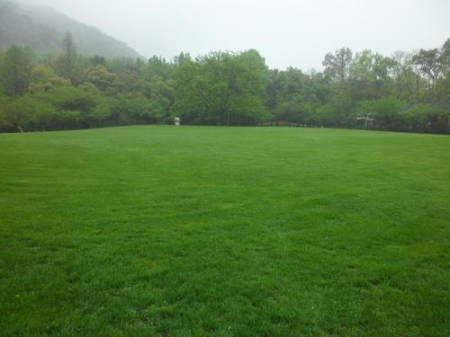 混播草坪的日常养护