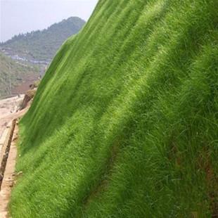 成都市混播草种