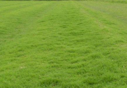 混播草籽播种时间