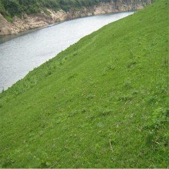 河南高速公路护坡草籽什么时间播种比较好