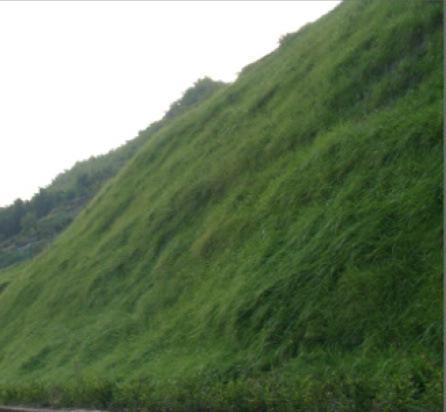 河南河堤护坡种草