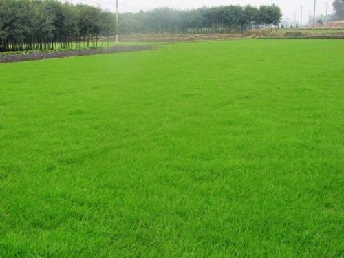 混播草播种量
