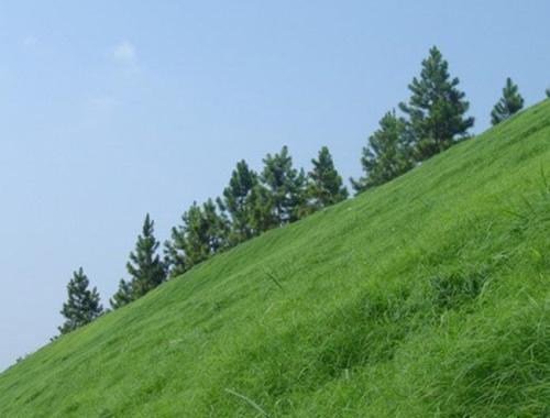 混播草坪草种供应商
