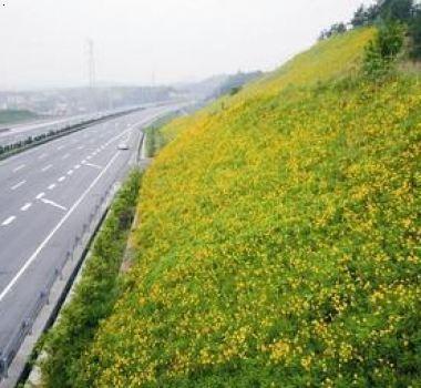 济宁护坡草种找哪家