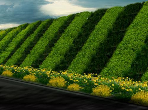 菏泽河堤护坡用什么草种好