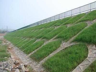 菏泽河岸护坡草种