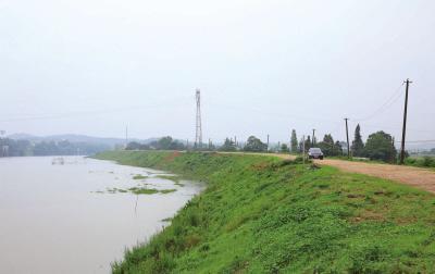 河堤绿化护坡草种