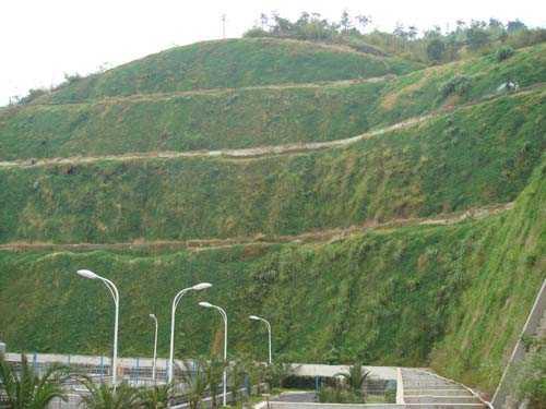 四川成都混播草草坪种子