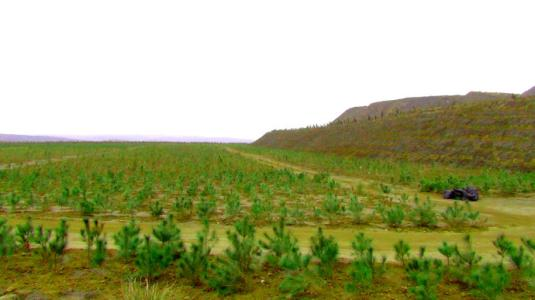 矿山复绿草种有哪些