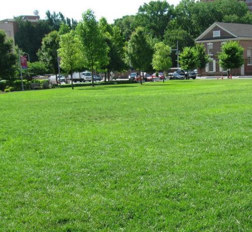 混播草坪草种子