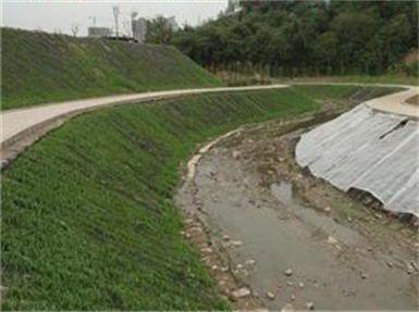 济宁红旗河护坡有什么草种