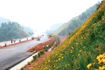 高速公路护坡草种供应厂家