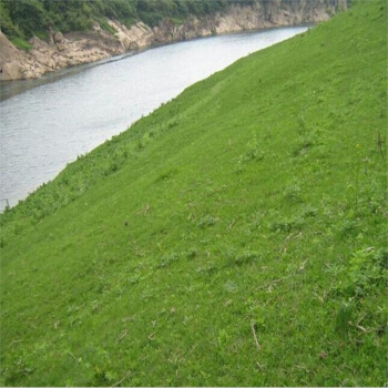 河南品种好的混播草种供应