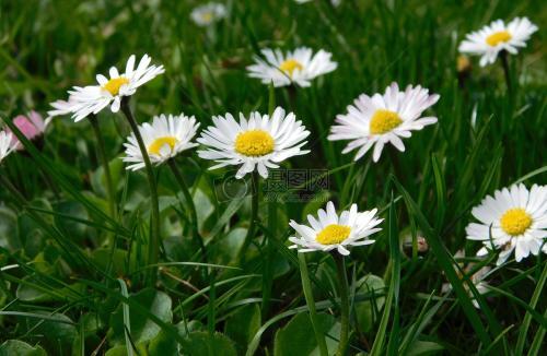 四季草花有哪些品种