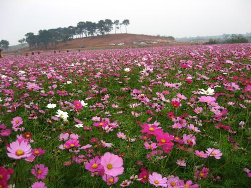 河道护坡花卉