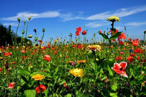适合护坡的花