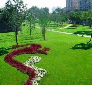 园林绿化常用草种哪些
