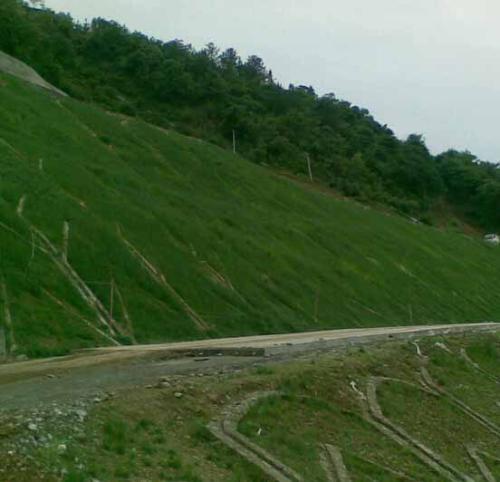 河南边坡绿化喷播种子