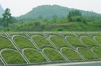 边坡绿化草种子多少钱一斤