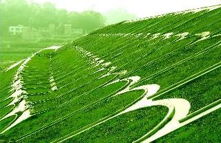 护坡高羊茅草种多少钱一斤哪有卖的