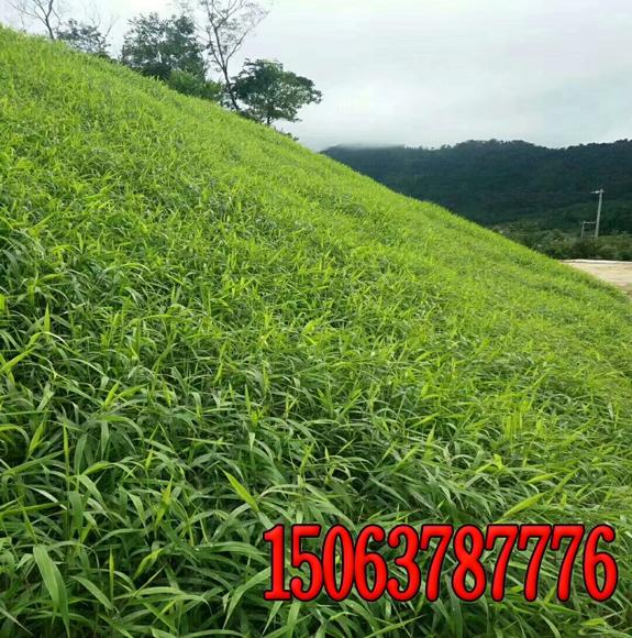 甘肃护坡绿化工程