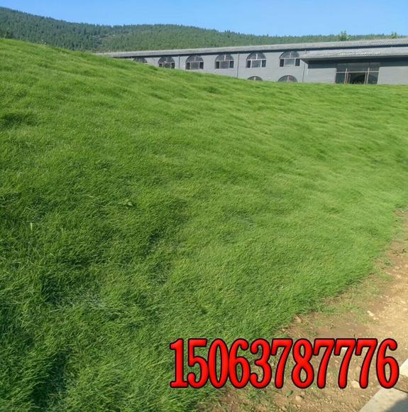 黄土护坡如何绿化