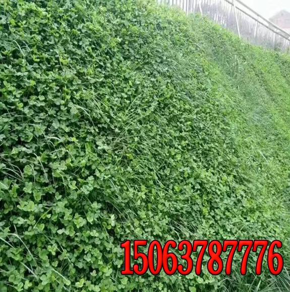 广西铁路边坡绿化无纺布