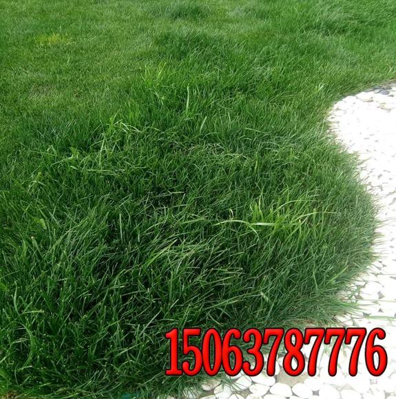 南阳护坡草籽总经销