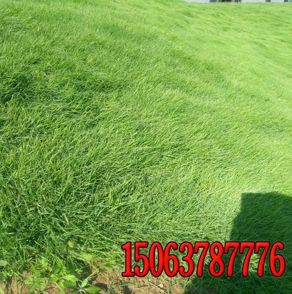 护坡绿化草籽怎么配比