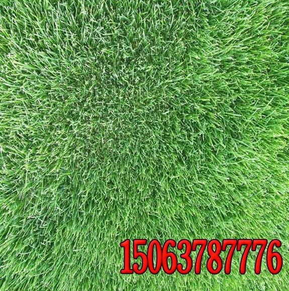 绿化用草籽种植方法