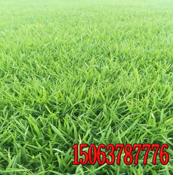 常见纤维喷播绿化草籽配合比