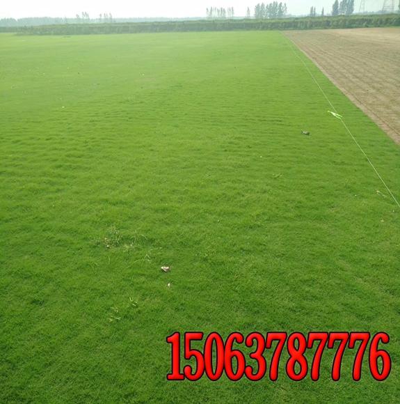 草籽绿化边坡的价格
